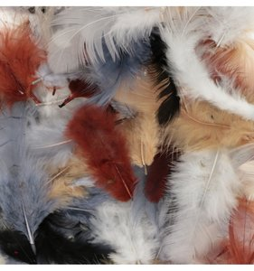 Set plumas variadas Natural