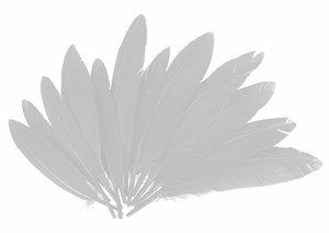 Set de plumas Blancas 14 cm 60 pcs