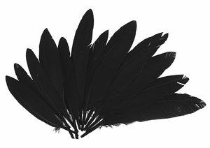 Set de plumas Negras 14 cm 60 pcs