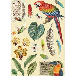 Maderitas coloreadas Stampería Amazonia Loros